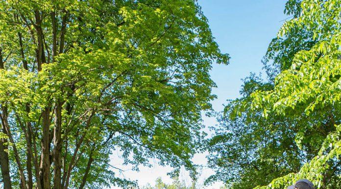 Rosemèrites plant new trees at Externat Sacré-Cœur woods