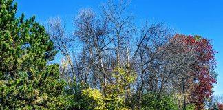 Rosemère to renaturalize its 'Les Roitelets' woods